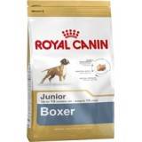 Boxer Junior