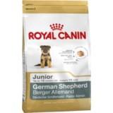 German Shepperd Dog Junior