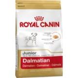 Dalmata Junior