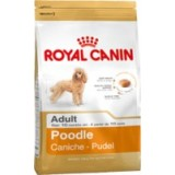 Poodle (Caniche Adult)