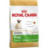 Pug Junior