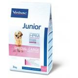 Junior Special Large