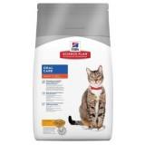 Feline Adult Oral Care