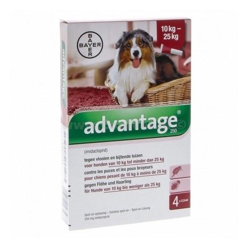 Advantage 250 Dog