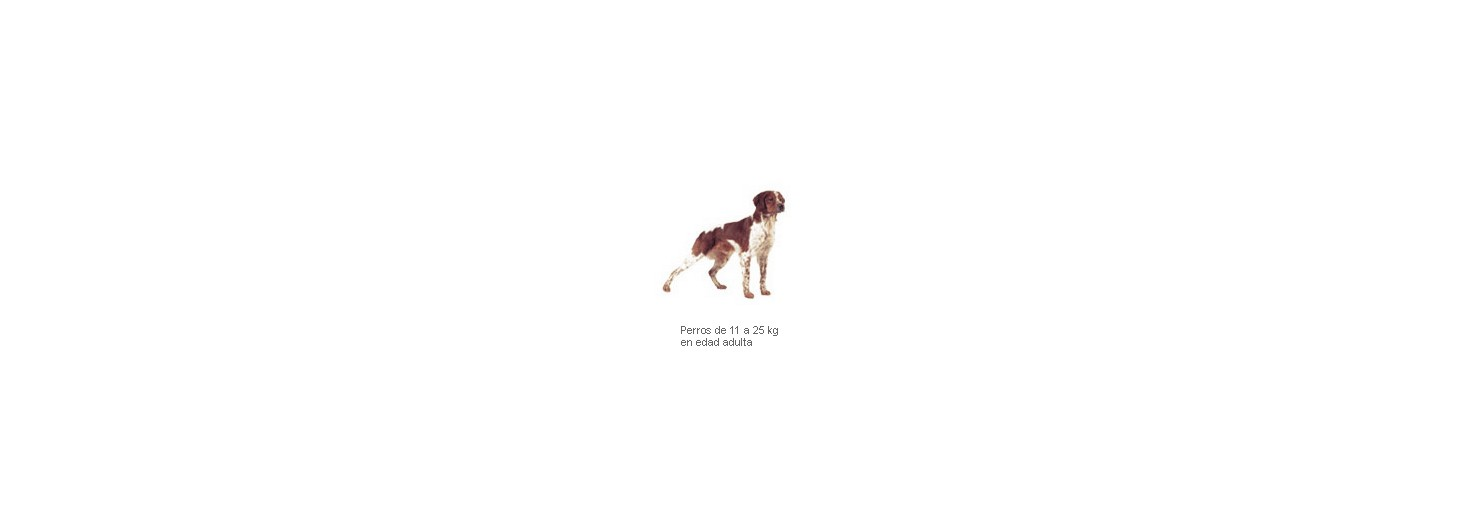 Adv. Dog Medium