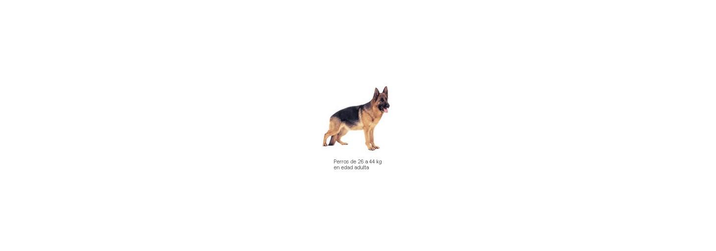Adv. Dog Maxi